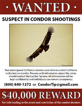 Tracking the Condor Shooter – National Public Radio