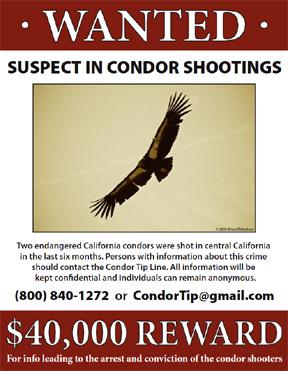 Tracking the Condor Shooter – National Public Radio